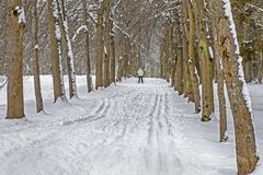 Ski track in the snow along the tree lane in the park in winter. Stock Photos