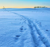 Ski track on a snow field Stock Photography