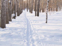 Ski track on snow in winter Park for sports Royalty Free Stock Photo