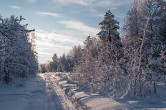 Ski track in a snowy forest on a sunny day. Stock Photo