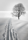 Ski track and tree Royalty Free Stock Photography