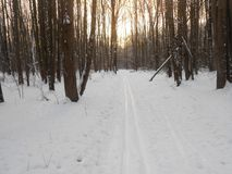 Ski track between the trees. Stock Photos