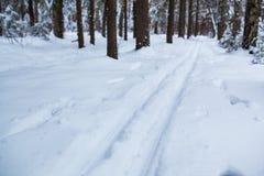 Ski track Stock Image