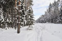Ski track in winter forest Royalty Free Stock Photography