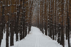 Ski track through the winter forest Royalty Free Stock Photography