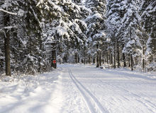 Ski track in winter Russian forest Royalty Free Stock Photos