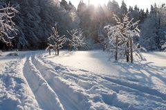 Ski track and winter trees Stock Photo