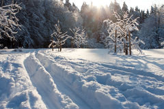 Ski track and winter trees Royalty Free Stock Photos