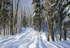 Ski track in winter wood. Royalty Free Stock Photos