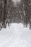 Ski track in the winter wood Stock Images