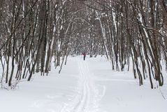 Ski track in the winter wood Stock Image