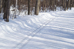 Ski track in the woods Stock Image