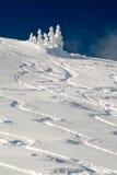 Ski tracks. In fresh powder snow Stock Photo