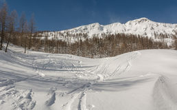 Ski tracks. On a slope surrounded with trees and mountains in the back Royalty Free Stock Photography