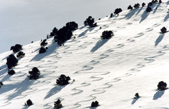 Ski Tracks. In fresh Powder stock photo