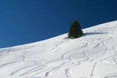 Ski tracks. In the snow Stock Photography