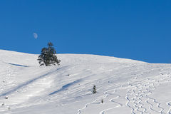 Ski Tracks on an Alpine Slope Royalty Free Stock Image