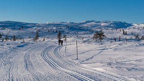 Ski tracks. In norwegian mountain Royalty Free Stock Image