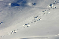 Ski tracks in the powder snow Royalty Free Stock Images