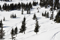 Ski tracks in the powder snow and fir trees Stock Photos