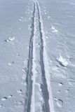 Ski tracks in the snow Royalty Free Stock Photography