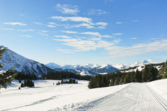 Ski tracks in snow forest in Alps Royalty Free Stock Photos