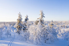 Ski tracks in snowy forest. On sunny day stock photos