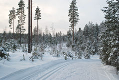 Ski trail. Royalty Free Stock Images