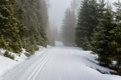 Ski trail in the forest. Royalty Free Stock Photos