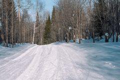 Ski trail in the forest. Traasa in the winter forest. The road for walking through the winter forest. Taiga in the winter. Tracks. From the snowcat. Footprints royalty free stock photo