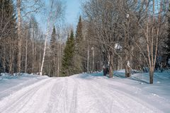 Ski trail in the forest. Traasa in the winter forest. The road for walking through the winter forest. Taiga in the winter. Tracks. From the snowcat. Footprints stock photos