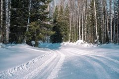 Ski trail in the forest. Traasa in the winter forest. The road for walking through the winter forest. Taiga in the winter. Tracks. From the snowcat. Footprints royalty free stock image