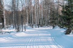 Ski trail in the forest. Traasa in the winter forest. The road for walking through the winter forest. Taiga in the winter. Tracks. From the snowcat. Footprints stock photography