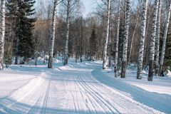 Ski trail in the forest. Traasa in the winter forest. The road for walking through the winter forest. Taiga in the winter. Tracks. From the snowcat. Footprints royalty free stock photography