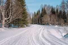 Ski trail in the forest. Traasa in the winter forest. The road for walking through the winter forest. Taiga in the winter. Tracks royalty free stock photography