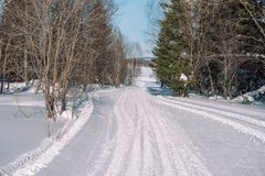 Ski trail in the forest. Traasa in the winter forest. The road for walking through the winter forest. Taiga in the winter. Tracks royalty free stock photo
