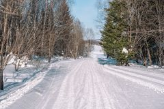 Ski trail in the forest. Traasa in the winter forest. The road for walking through the winter forest. Taiga in the winter. Tracks royalty free stock images