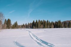 Ski trail in the forest. Traasa in the winter forest. The road for walking through the winter forest. Taiga in the winter. Tracks. From the snowcat. Footprints stock image
