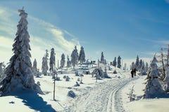 Ski Trail in het hele land royalty-vrije stock afbeelding
