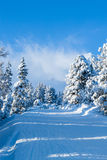 Ski trail in the mountains. Between the snow-capped fir trees royalty free stock photography