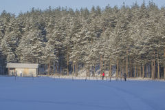 Ski trail. People skiing, Saint Petersburg, Russia Royalty Free Stock Images