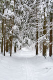 Ski trail Royalty Free Stock Images