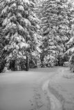 Ski trail with snow covered trees. A skin path for skis with snow covered trees stock photo