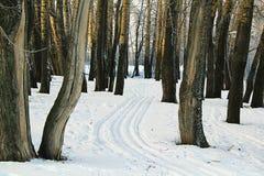 Ski trail. Ski track between the trees Royalty Free Stock Image