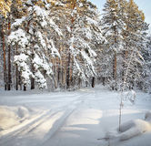 Ski trail in the winter cold forest Stock Photos