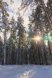 Ski trail in the winter forest. Snowy forest and sunny weather stock photos