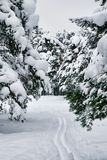 Ski Trails Royalty Free Stock Image