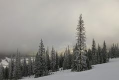 Ski Trails på monarkberget Royaltyfria Bilder