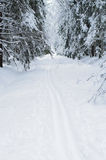 Ski trails in snowy woods Royalty Free Stock Images