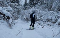 skialpinisme in het bos met verse sneeuw stock afbeeldingen